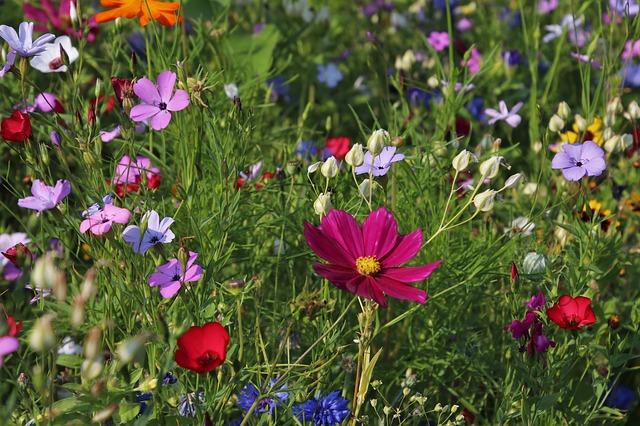 květiny na louce