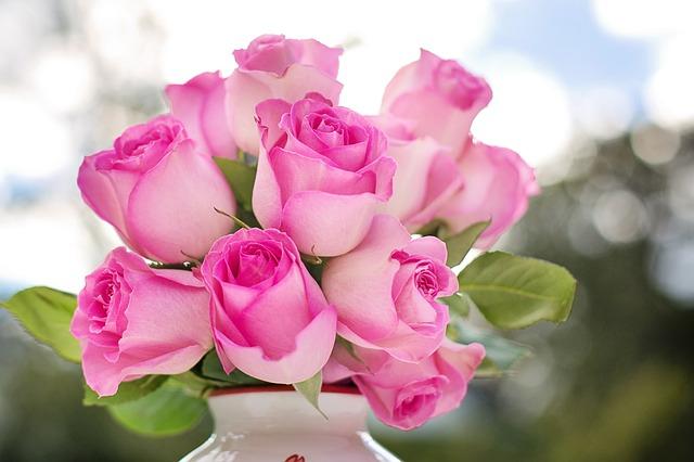 růžové růžičky